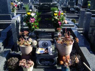 お墓の多肉寄せ植え~年末置き去り組みでしたがなんとか元気に枯れながら紅葉中♪~新年供養~墓参りしました♪2013.01.02
