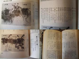 「シャボテン小百科」より一部抜粋~葦サボテンの日本名いろいろ載っています♪2013.01.21