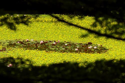 植物園ー14