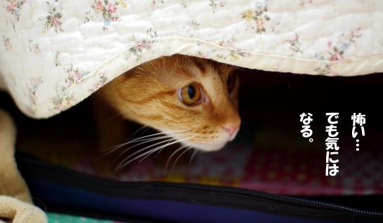 隠れながら覗くちゃちゃたんーs-あdさっさsだだdsのコピー