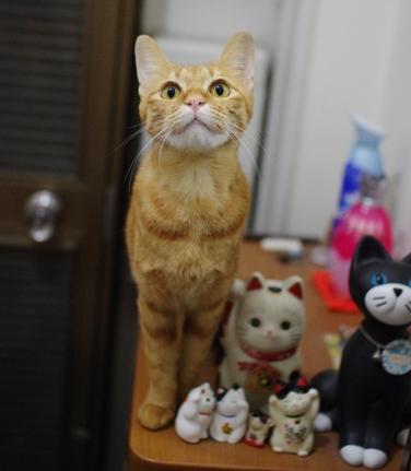 玄関の招き猫ーs-だーsだdsddd