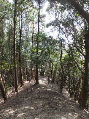2013 3 11 あーと合宿 金束の森へ 006_R