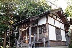121108埼玉県土屋神社大杉