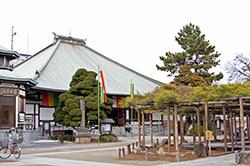 130106東京善養寺影向の松