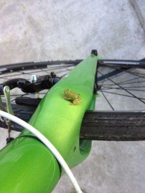 自転車と仲良しのカエル