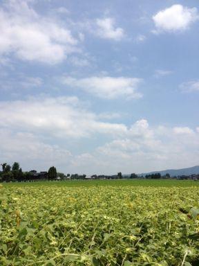 2012.08.04福野のひまわり畑