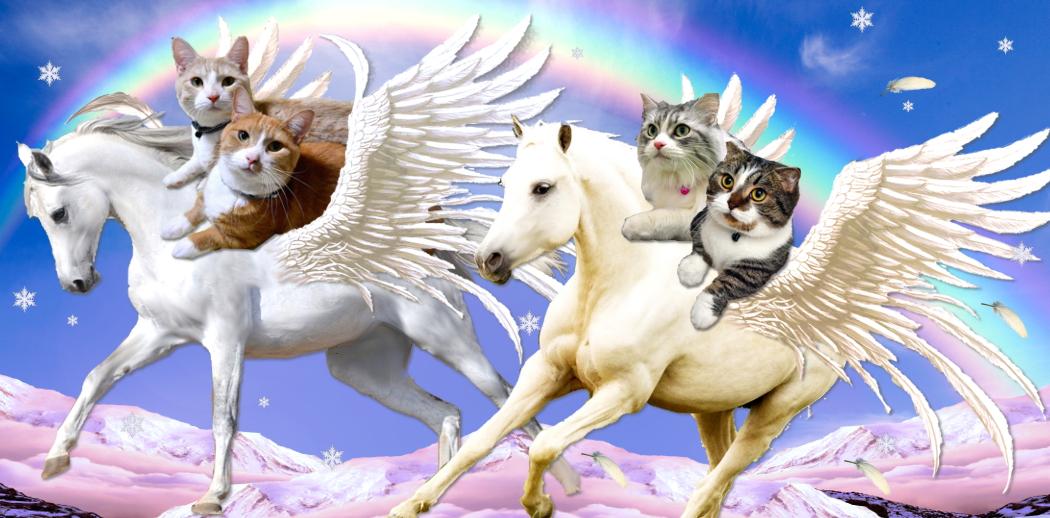 Pegasuscat-header2014a.jpg