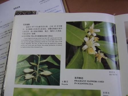 茉莉花茶 (1)