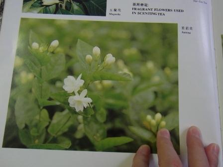 茉莉花茶 (2)