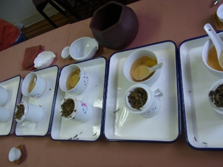 茉莉花茶 (6)