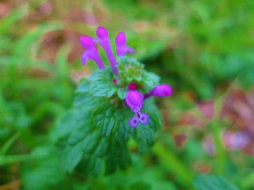 20121202・植物04