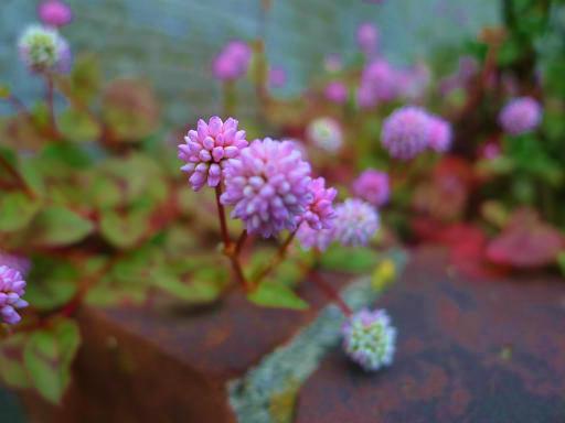 20121202・植物02