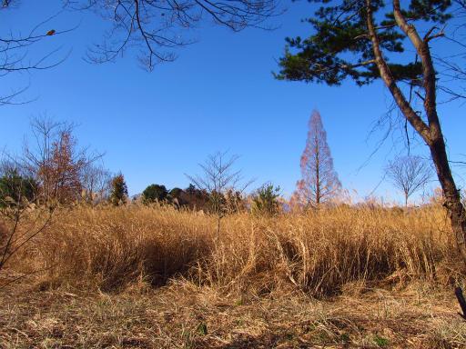 20121216・緑の森納会19