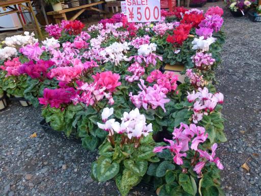 20130102・初詣植物01