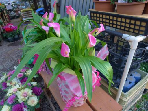 20130102・初詣植物10