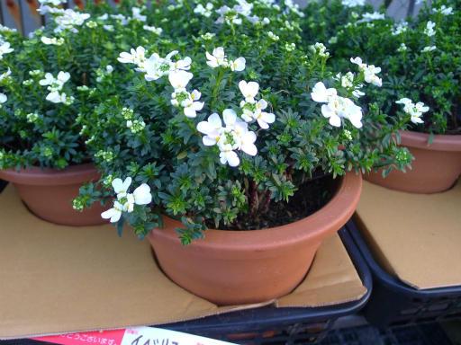 20130102・初詣植物08
