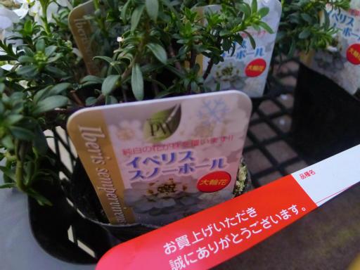 20130102・初詣植物17