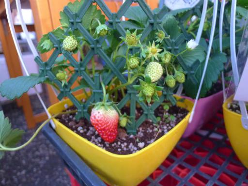 20130102・初詣植物14