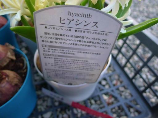 20130102・初詣植物23