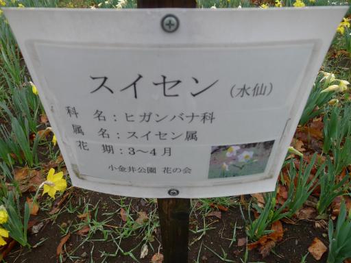 20130327・植物04-1