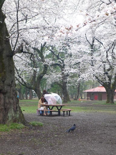 20130327・桜1-11
