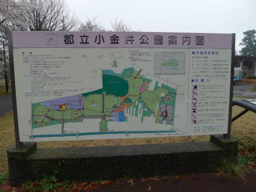 20130327・桜2-04・大
