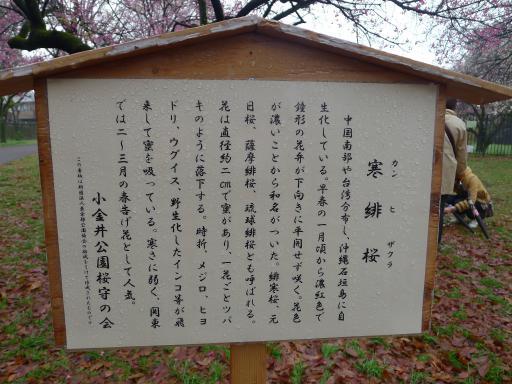 20130327・桜2-14・中
