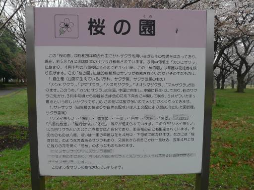 20130327・桜3-02・中