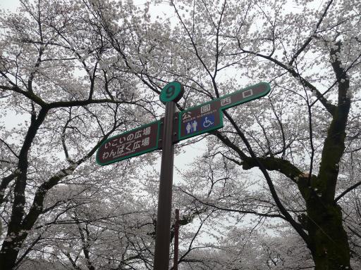 20130327・桜3-13