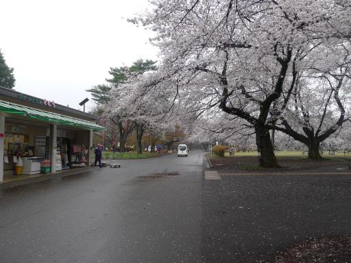 20130327・桜と空02