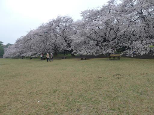 20130327・桜と空04