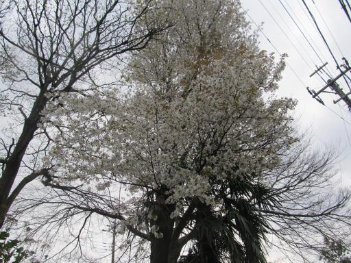 20130401・植物06