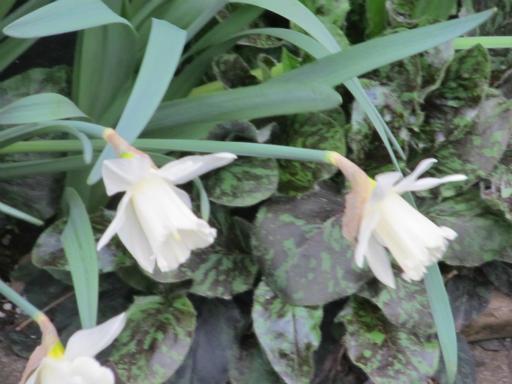 20130401・植物04