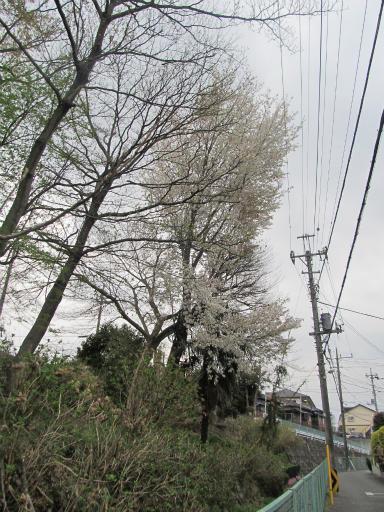 20130401・植物05