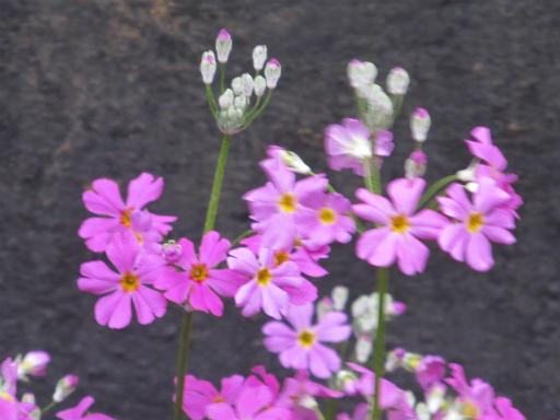 20130401・植物02