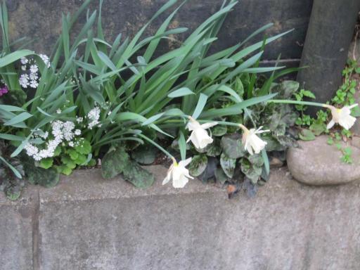20130401・植物03