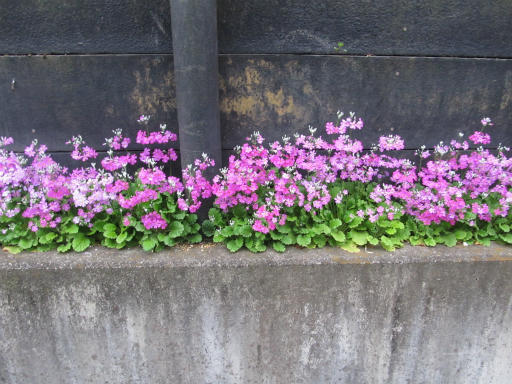 20130401・植物01