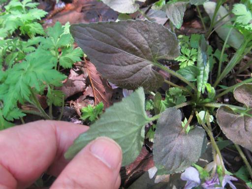 20130407・緑の森1-16
