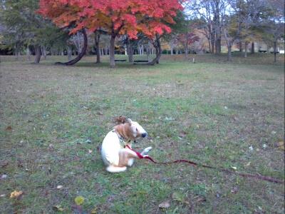 fc2blog_20121113080108dd1.jpg
