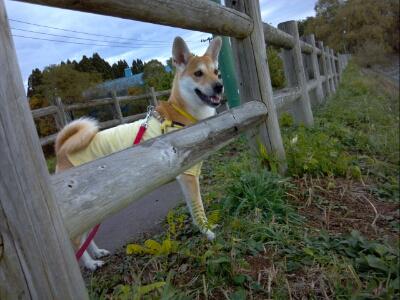 fc2blog_20121113080417cd6.jpg