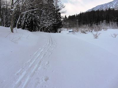 東山自然園の道
