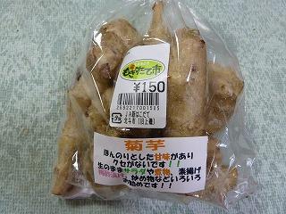 菊芋2013の1