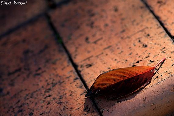 レンガと落ち葉