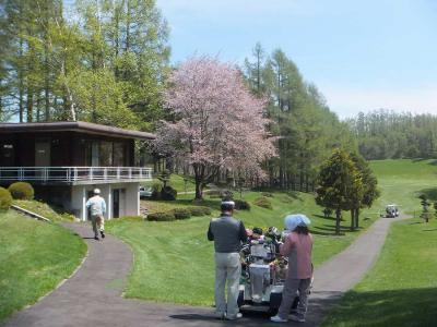 売店横の桜