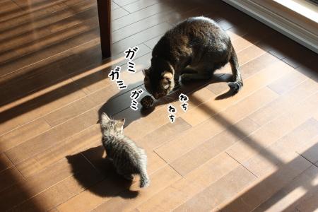 子猫の耳に念仏