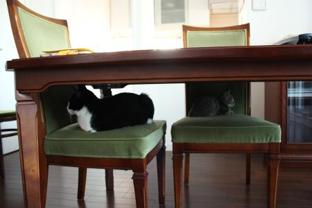 緑の椅子に、チーと桃