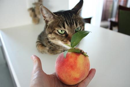 アイと青森から届いた桃