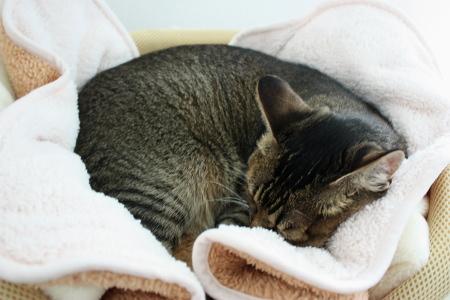メッシュ&タオルから、ボア毛布へ