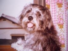優しい気持ちになれる・なりたい人へ癒しイラストをプレゼント-犬 ミックス犬