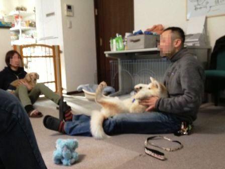 犬のセミナー